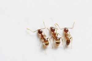 ant treatments in los angeles
