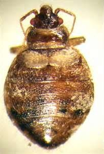 bed bug treatments in los angeles